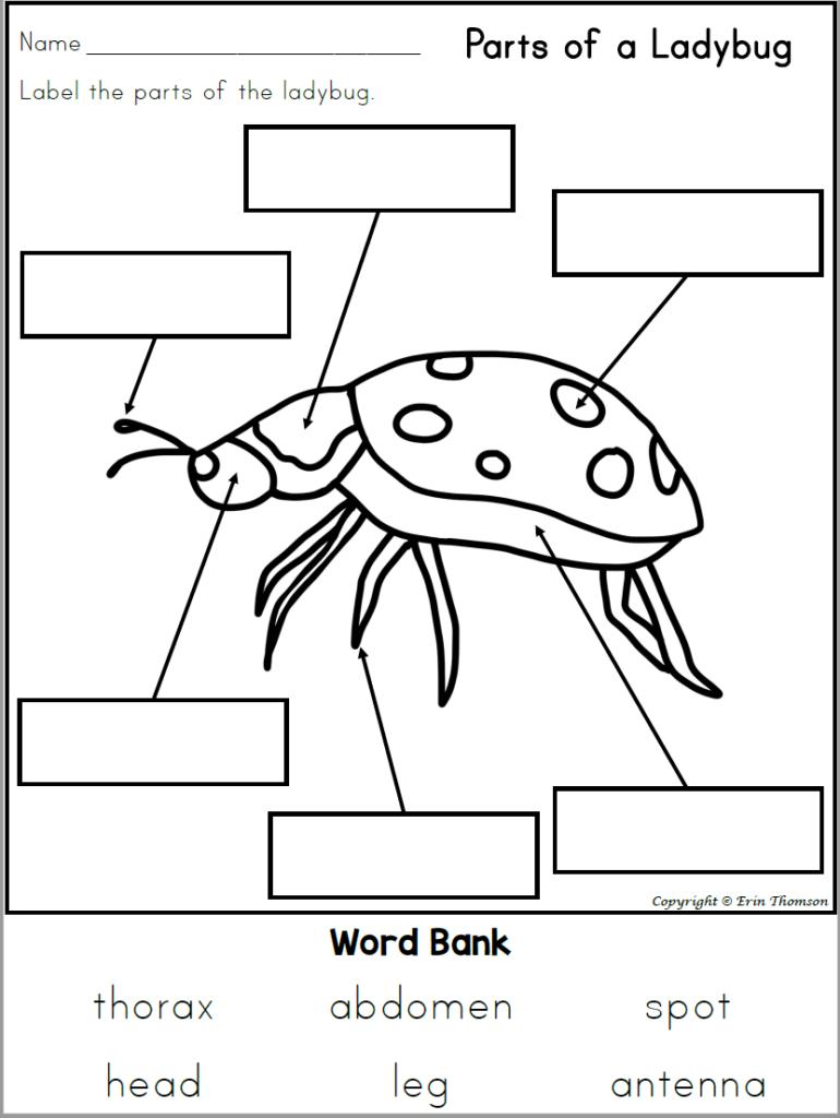 Description: MacBookAir:Users:henrik:Documents:ladybuglabelling.PNG